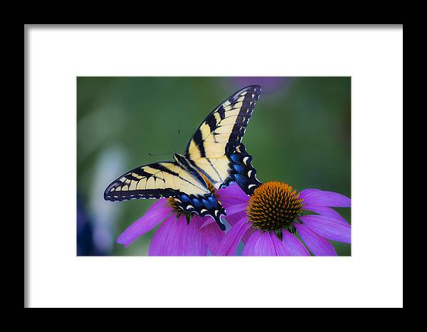 Photographs Framed Print featuring the photograph Brilliant And Broke by Teresa Mucha