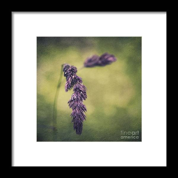 Grass Framed Print featuring the photograph Brin D'herbe by Angela Doelling AD DESIGN Photo and PhotoArt
