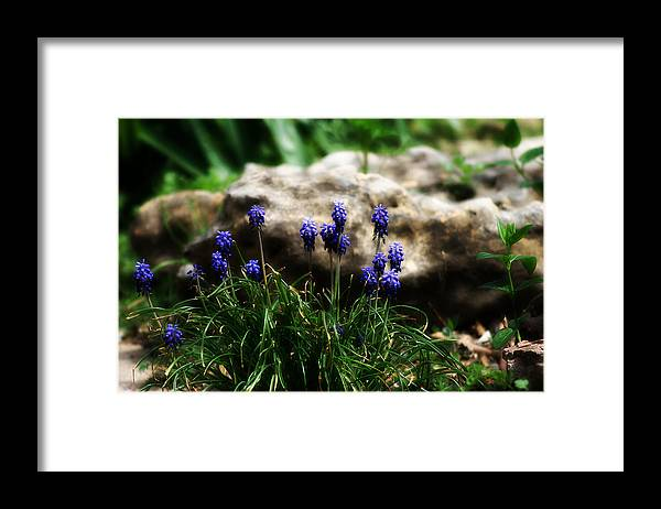 Flowers Framed Print featuring the photograph Bring on the purple by Toni Hopper