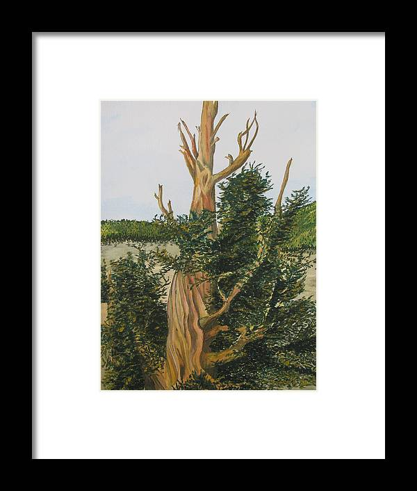 Framed Print featuring the painting Bristle Wood Pine by Dale Yarmuth