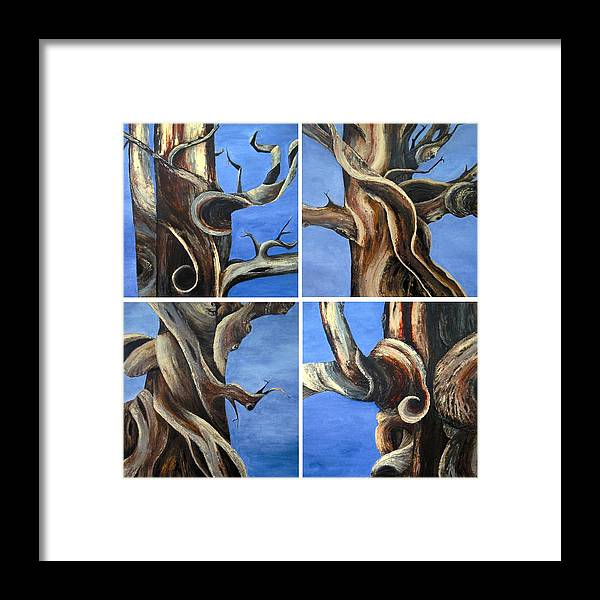 Bristlecone Trees Framed Print featuring the painting Bristlecone Tree Set by Wanda Pepin