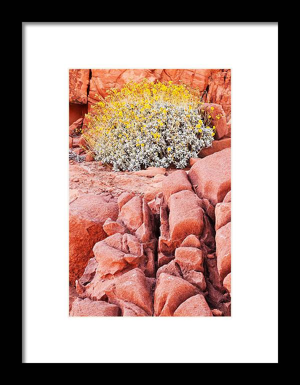 Valley Of Fire Framed Print featuring the photograph Brittlebush Bloom by James Marvin Phelps