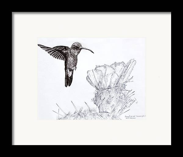 Wildlife Framed Print featuring the drawing Broadbilled Hummingbird by Wade Clark