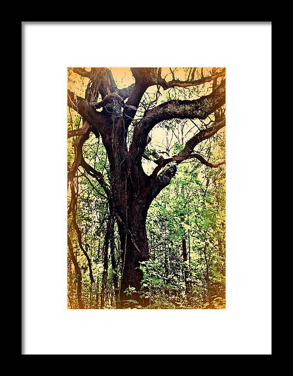 Tree Framed Print featuring the photograph Broken Branch by Jill Tennison