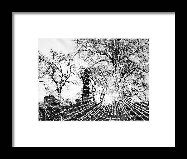 Tree Framed Print featuring the photograph Broken Trees by Munir Alawi