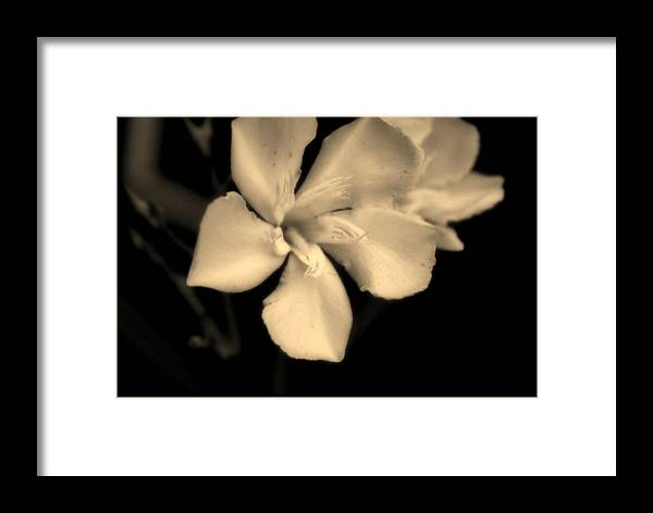 Flower Framed Print featuring the photograph Bronze Frost White Flower by Gulf Island Photography and Images