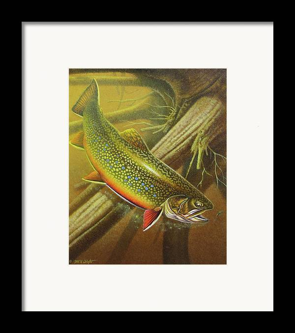 Jon Q Wright Brook Trout Fly Fishing Fly Fish Fishing Nymph Stream River Lake Framed Print featuring the painting Brook Trout Cover by JQ Licensing