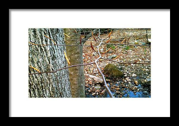 Brookside Gardens Framed Print featuring the photograph brookside Sring s.1 by Mpagijk Mpagijk