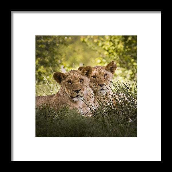Chad Davis Framed Print featuring the photograph Brothers by Chad Davis