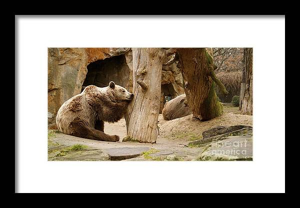 Brown Framed Print featuring the photograph Brown Bears by Louise Fahy