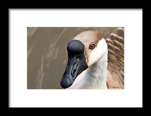 Chinese Brown Goose Framed Print featuring the photograph Brown Eye by Christopher Holmes