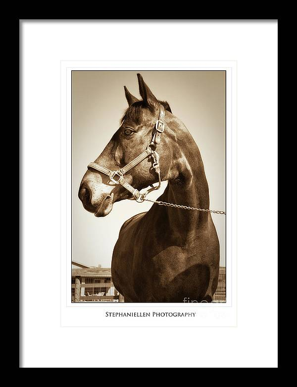 Horse Framed Print featuring the photograph Brown Horse by Stephanie Hayes