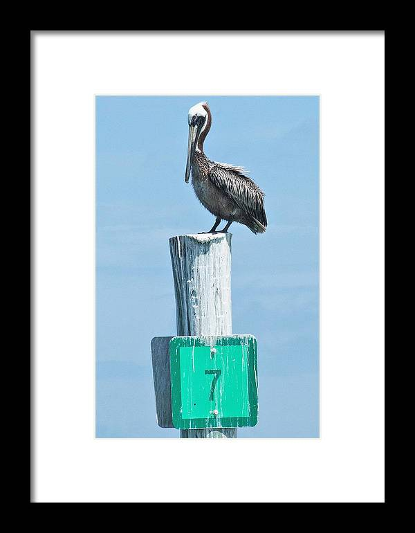 Brown Pelican Framed Print featuring the photograph Brown Pelican On Marker 7 by Mary Ann Artz