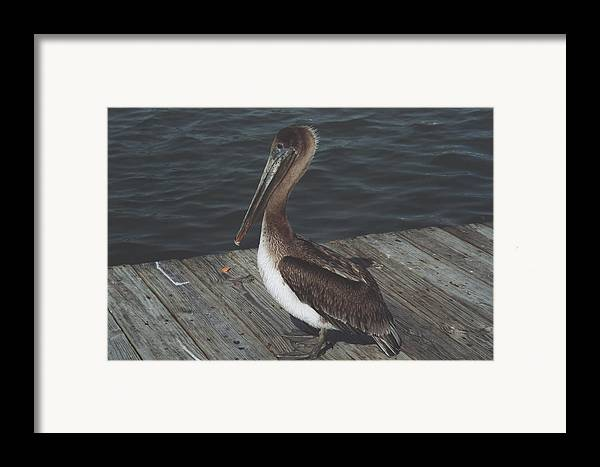Bird Framed Print featuring the photograph Brown Pelican On Pier 2 by Wendell Baggett