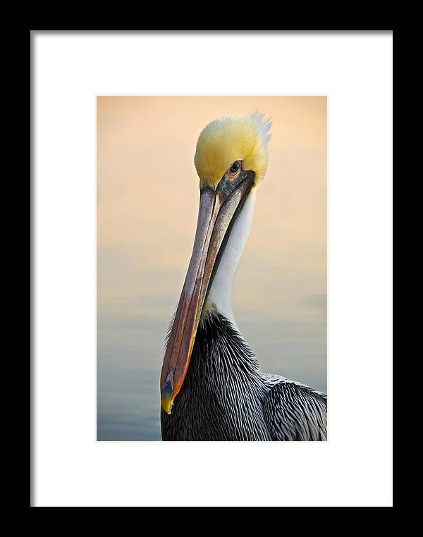 Pelican Framed Print featuring the photograph Brown Pelican Portrait by Georgia Nick