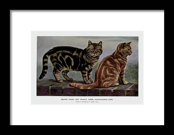 Cats Framed Print featuring the painting Brown Tabby And Orange Tabby by W Luker Junior