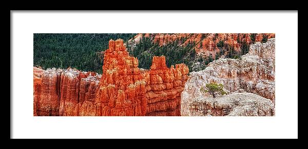 Bryce Canyon Scenic Framed Print featuring the photograph Bryce Canyon - Lone Tree by Bob Coates