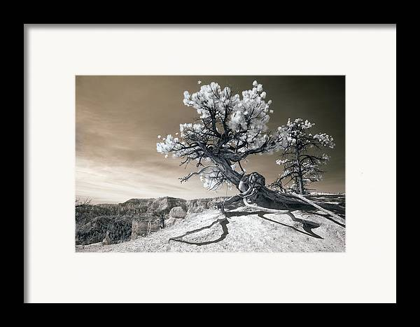 Bryce Framed Print featuring the photograph Bryce Canyon Tree Sculpture by Mike Irwin