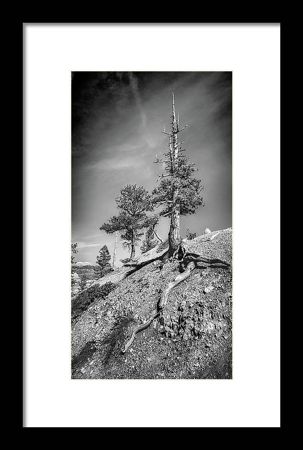 Bryce Trees lack And White Outdoor Nature Framed Print featuring the photograph Bryce Canyon Treescape by DeAnn Peterson