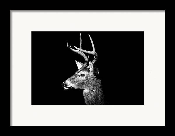 Horizontal Framed Print featuring the photograph Buck In Black And White by Malcolm MacGregor