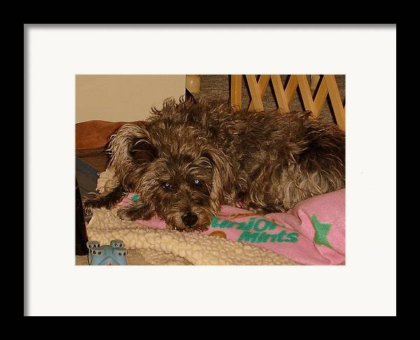 Dog Framed Print featuring the photograph Buddy by Lessandra Grimley