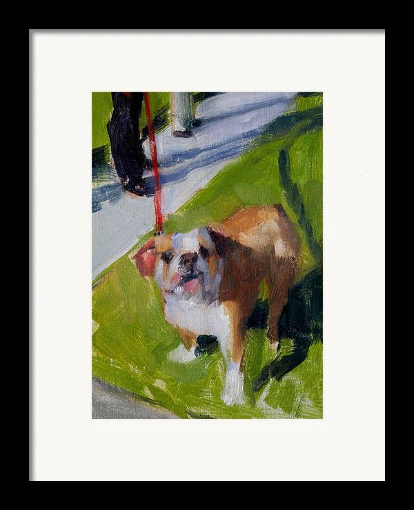 Bulldogs Framed Print featuring the painting Buddy On A Red Leash by Merle Keller