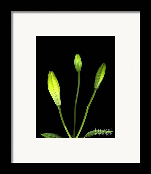 Botanics Framed Print featuring the photograph Buds by Christian Slanec