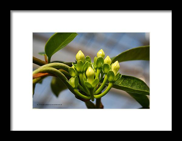 Yellow Framed Print featuring the photograph Buds by KatagramStudios Photography