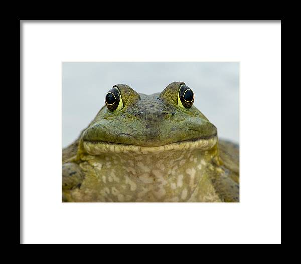 Kansas Framed Print featuring the photograph Bugsy by Fred Lassmann