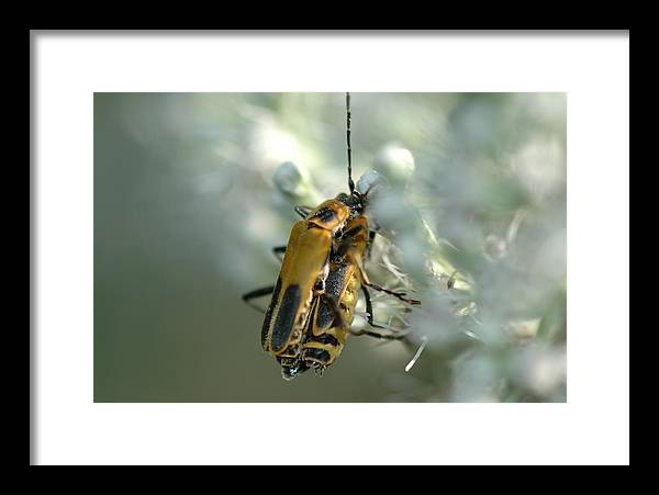 Insects Framed Print featuring the photograph Bugz In Spring by BS Garvin