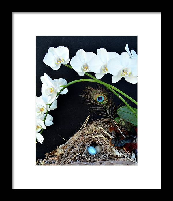 Bird Nest Framed Print featuring the photograph Building A Little Home by To-Tam Gerwe