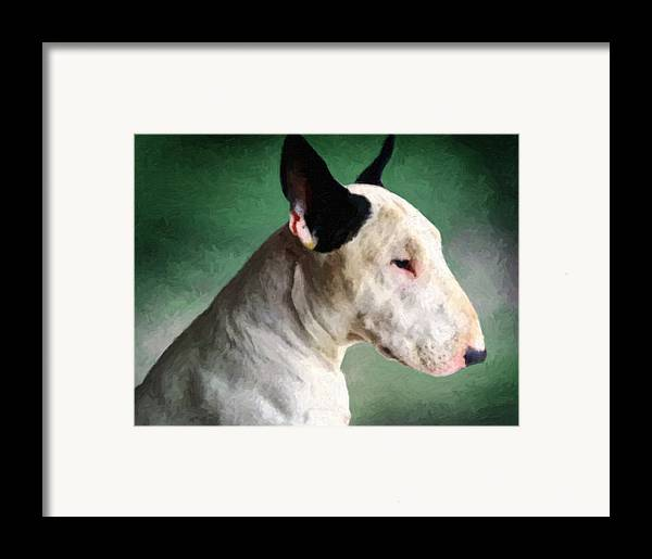 English Bull Terrier Framed Print featuring the painting Bull Terrier On Green by Michael Tompsett