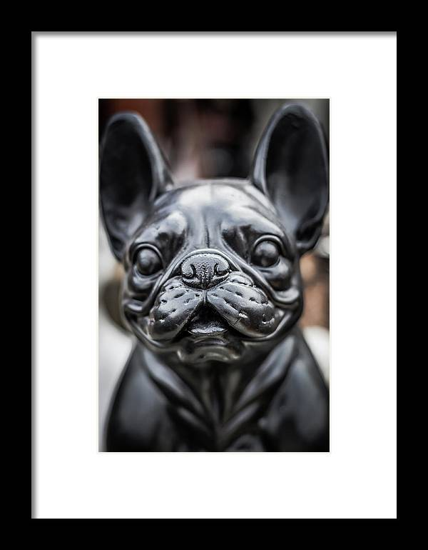 Australia Framed Print featuring the photograph Bulldog by Paradigm Blue