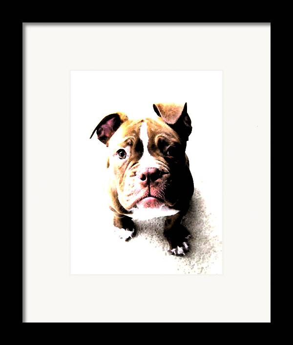 Bulldog Framed Print featuring the digital art Bulldog Puppy by Michael Tompsett