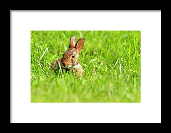 Texture Framed Print featuring the photograph Bunny In Field by Geraldine Scull