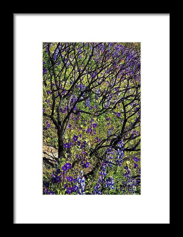 Landscape Framed Print featuring the photograph Burnt Bush by Greg Clure