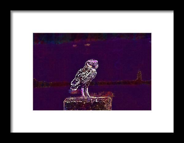 Burrowing Framed Print featuring the digital art Burrowing Owl Small Owl Bird Nature by PixBreak Art