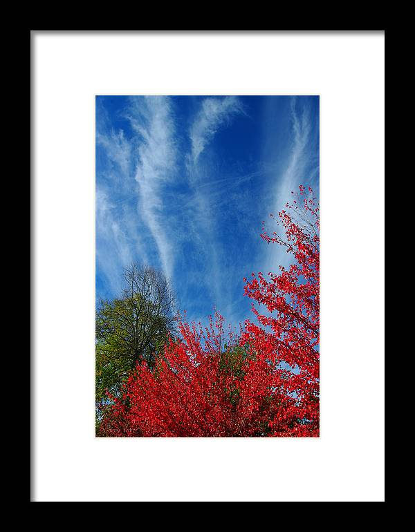 Autumn Framed Print featuring the photograph Burst Of Color by Gerry Tetz