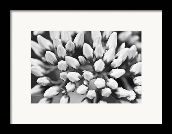(c) 2010 Framed Print featuring the photograph Burst by Ryan Kelly