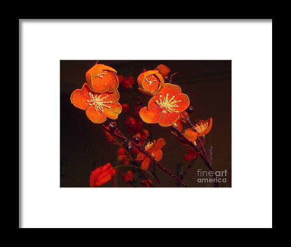 Flowers Framed Print featuring the photograph Bursting Into Bloom by Merton Allen