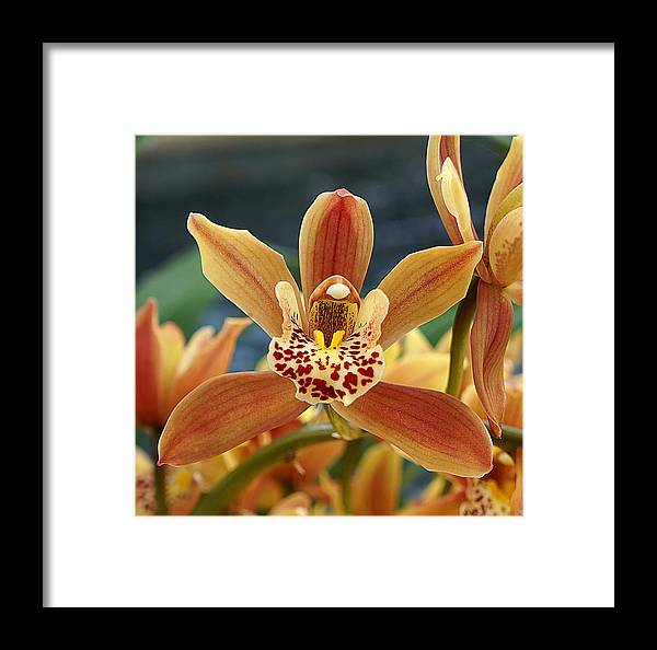 Ann Keisling Framed Print featuring the photograph Bursting Open by Ann Keisling