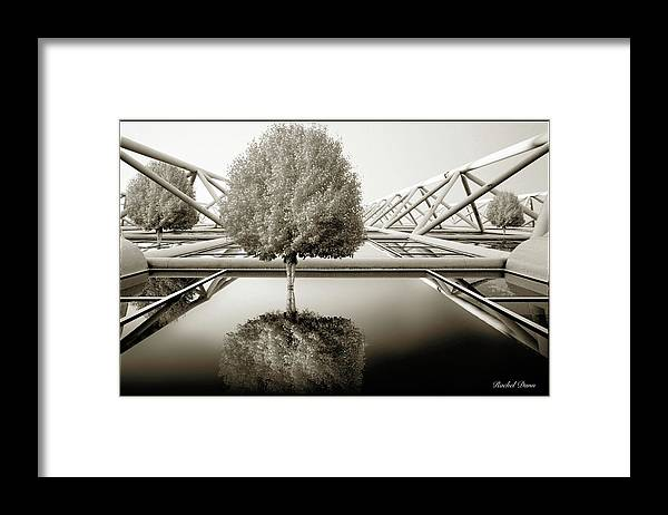 Abstract Framed Print featuring the photograph Bushy Hair by Rachel Dunn