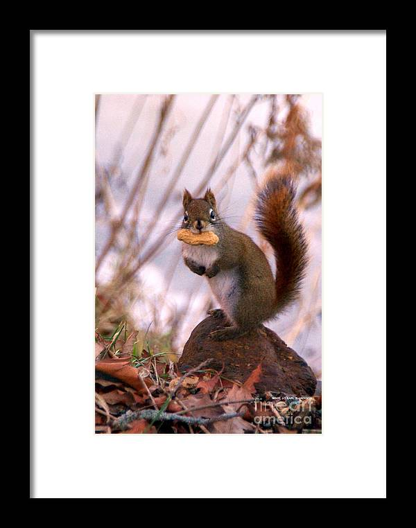 Wildlife Framed Print featuring the photograph Busted Who Me by Carl Jackson