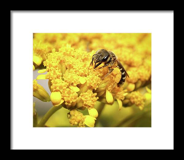 Animal Framed Print featuring the photograph Busy Bee by Dawn Currie