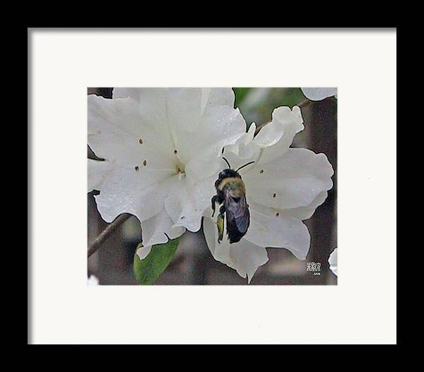 Flowers Framed Print featuring the photograph Busy Bee by Michele Caporaso