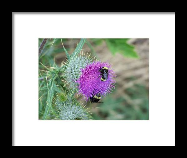 Flower Framed Print featuring the photograph Busy Bees by Gene Ritchhart