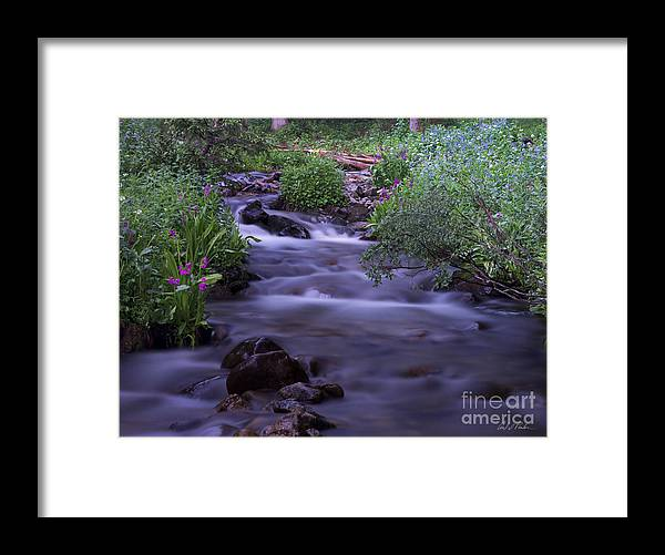 Butler Gulch Trail Berthoud Falls Colorado Empire Wildflower Framed Print featuring the photograph Butler Gulch Water by Carl Paulson