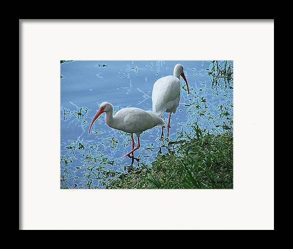 Birds Framed Print featuring the photograph Butt To Butt by Judy Waller