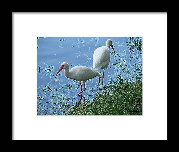 Birds Framed Print featuring the photograph Butt To Butt by Judy Waller