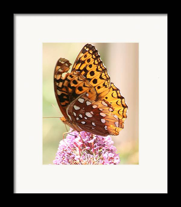 Framed Print featuring the photograph Butter Fly Thrown Looking Left by Curtis J Neeley Jr